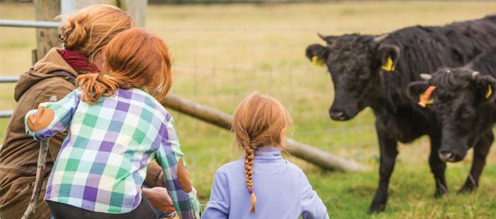 Girls Feeding Cows