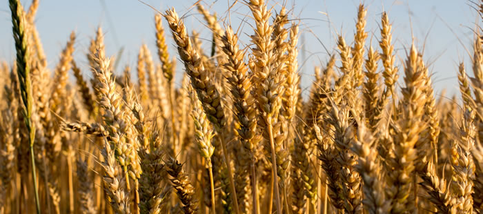 Termination of Crop Lease By the Landowner