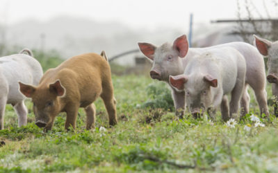 PA Supreme Court Decision In Agricultural Case